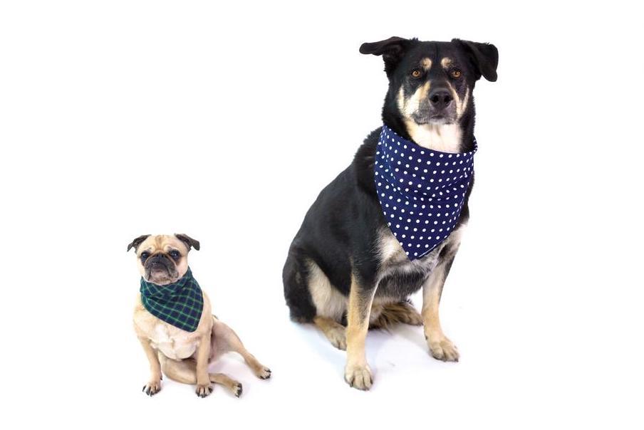 Small dog and big dog