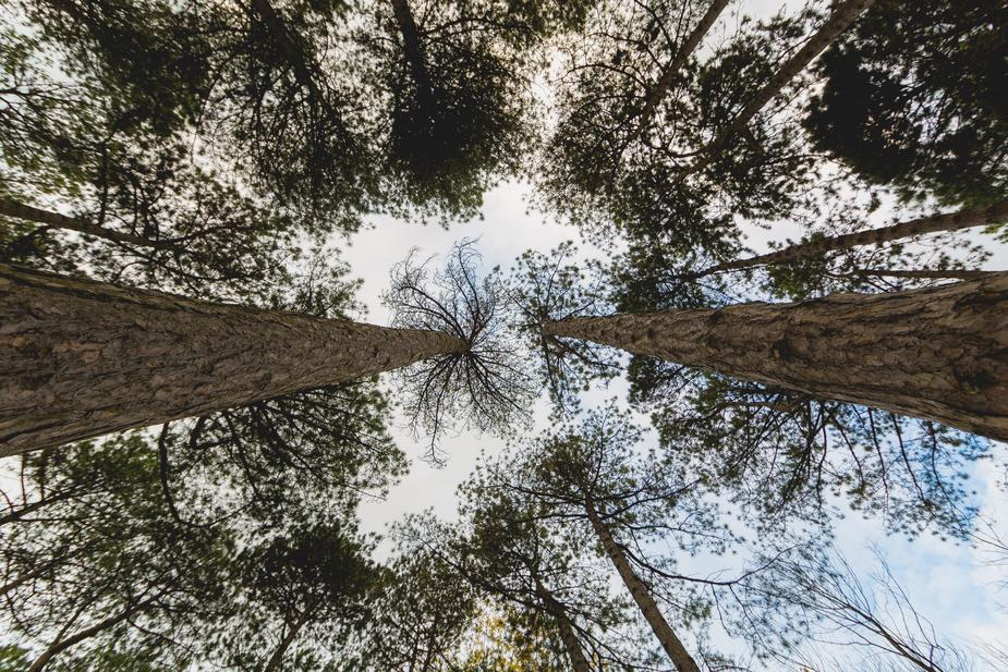 Ant's eye view of trees
